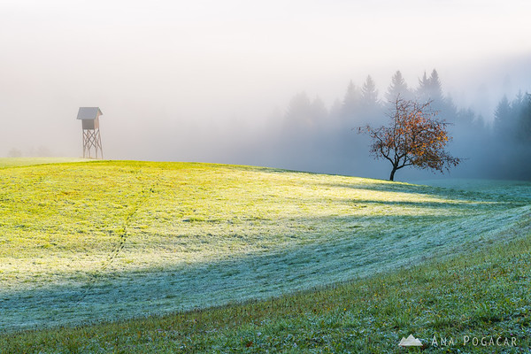 Frosty meadow as the sun tries to chase away the fog
