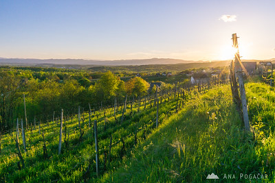 Sunset in Drašiči, Bela krajina