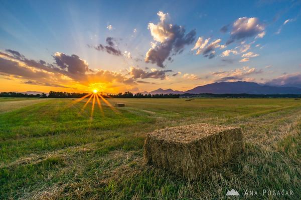 Hay bales in fields near Kamnik at sunset