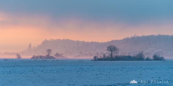 Mist, sunset, trees and birds