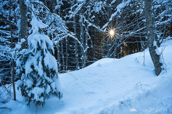 Hiking in the woods above Jezersko
