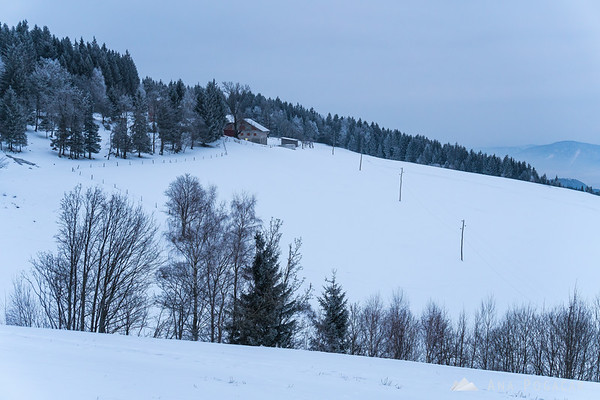 Hoar frost on the slopes of Rogla on a cold, cloudy day