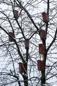 Bird feeders on trees