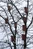 Bird feeders on trees