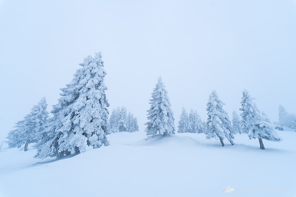 Snowy and foggy Mala planina