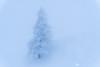 Foggy and snowy Velika planina