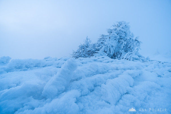 Frozen wonderland on Velika planina