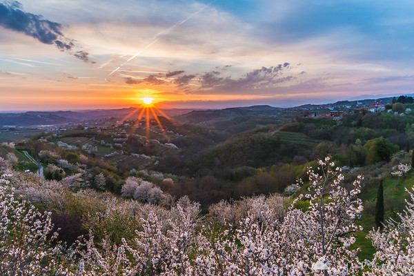 Sunset over blooming cherry trees in Šmartno, Goriška Brda