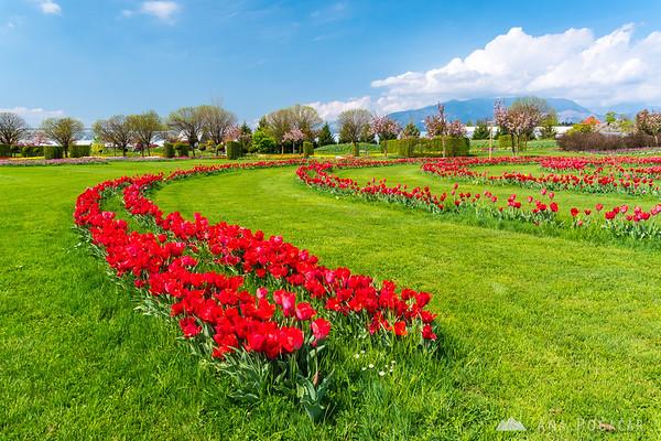 Tulip exhibition in Arboretum Volčji Potok