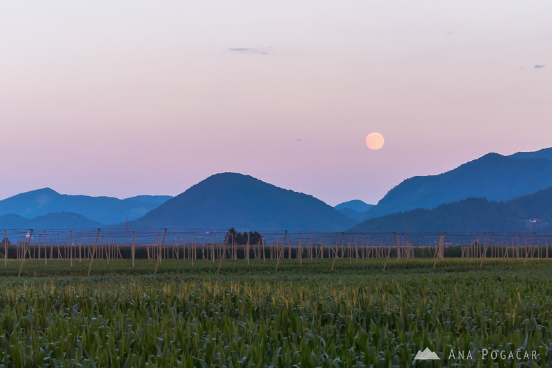 Full moon is rising somewhere near the village of Letuš