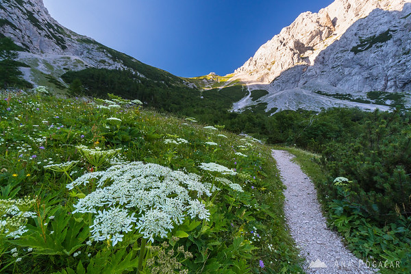 Hiking to the Kamnik Saddle