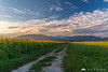 Golden light in the fields near Kamnik