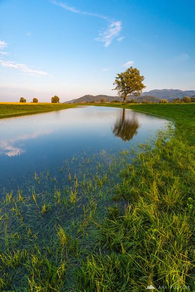At the old Ljubljanica riverbed on Ljubljana Marshes