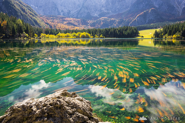 Dance of leaves on Mangart Lakes