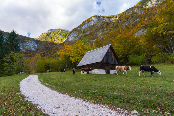 Voje valley in fall colors