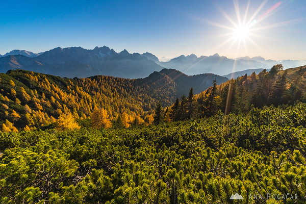 Gorgeous afternoon light on the larch-covered slopes of Mt. Trupejevo poldne
