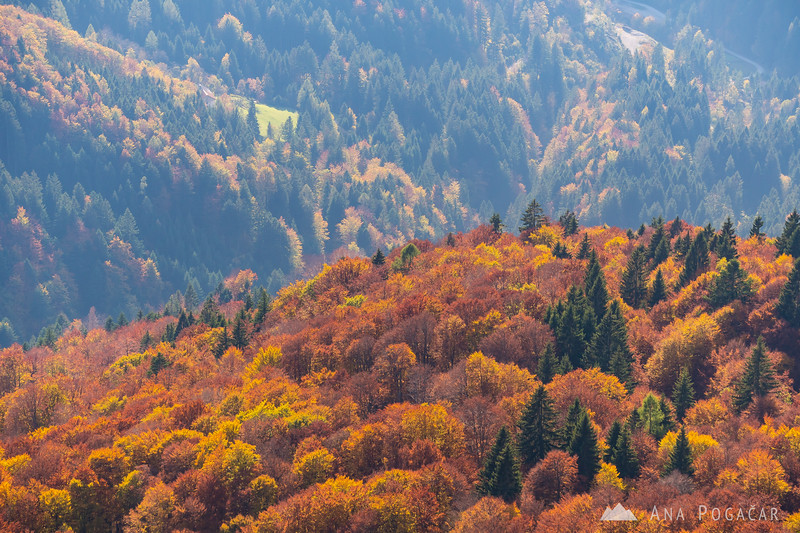 Fall foliage on the slopes of Slatnik