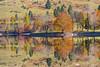 Lake Bohinj reflections