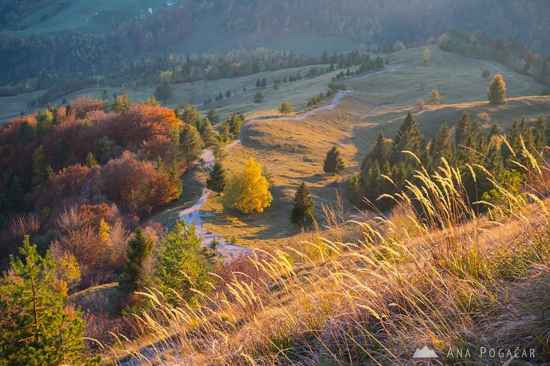 Fall colors on Kamniški vrh