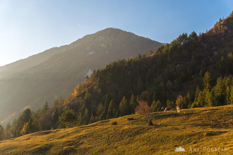 Horses on the slopes of Mt. Kamniški vrh
