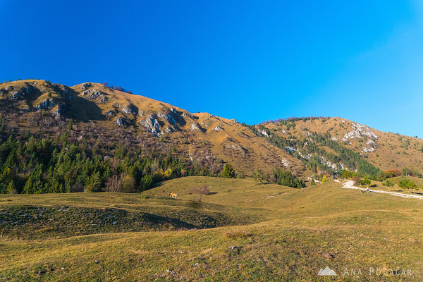 A horse on the slopes of Mt. Kamniški vrh
