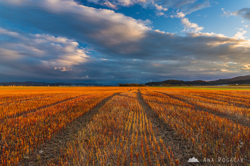Golden light on harvested fields near Kamnik