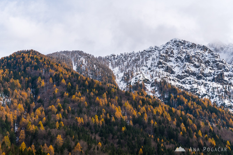 Snow and fall colors near Kranjska Gora