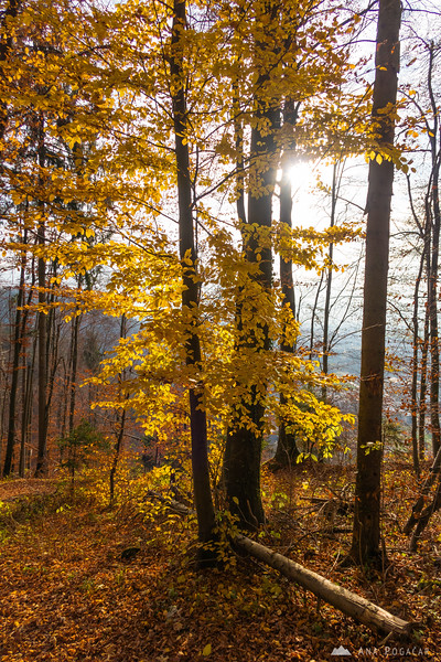 Fall colors on the slopes of Stari grad
