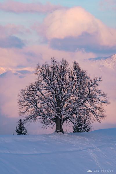 Tree in Jamnik