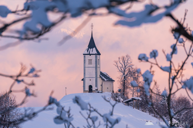 Jamnik church through snowy branches on a winter afternoon