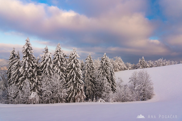 Winter wonderland at Goli vrh
