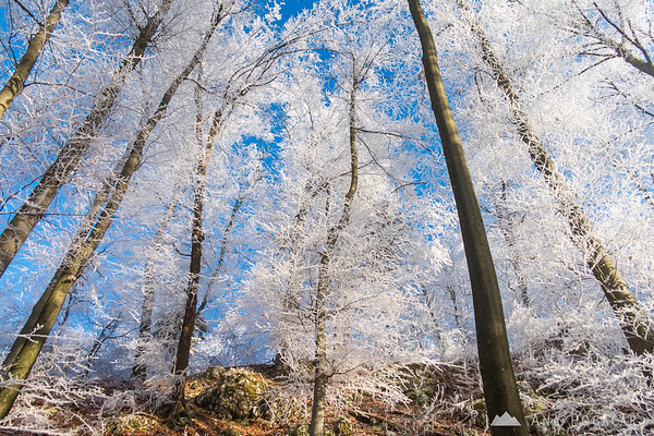 Frosty forest on Špica