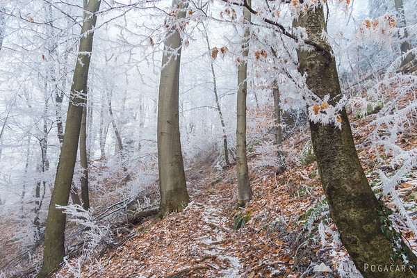Climbing Špica through the frosty forest