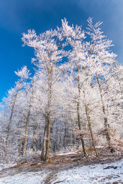 Frosty forest and the blue skies above Špica