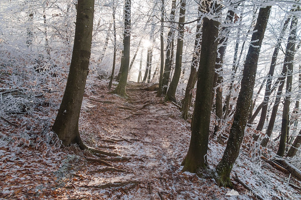 Sun penetrating the frosty forest on Špica