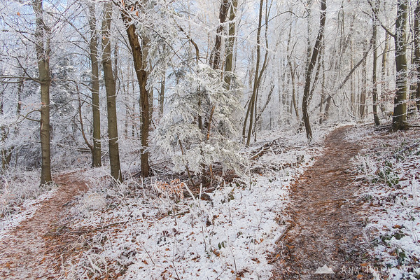 Foggy and frosty forest on Špica