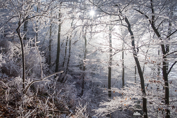 Sun trying to penetrate the frosty forest on Špica