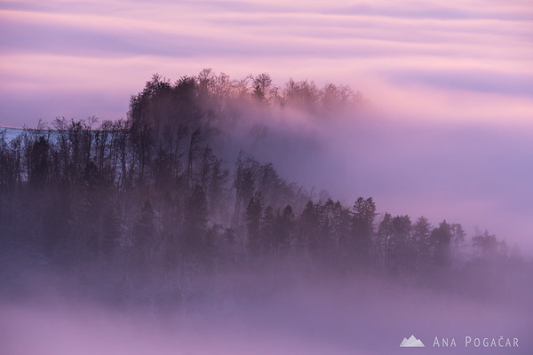 Fog enveloped forest at sunset