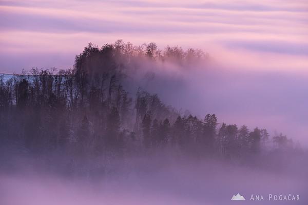 Fog enveloped forest at sunset