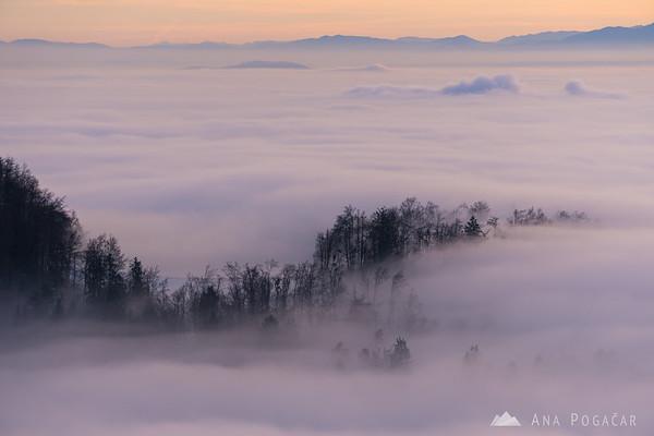 Fog swirling through the tree tops