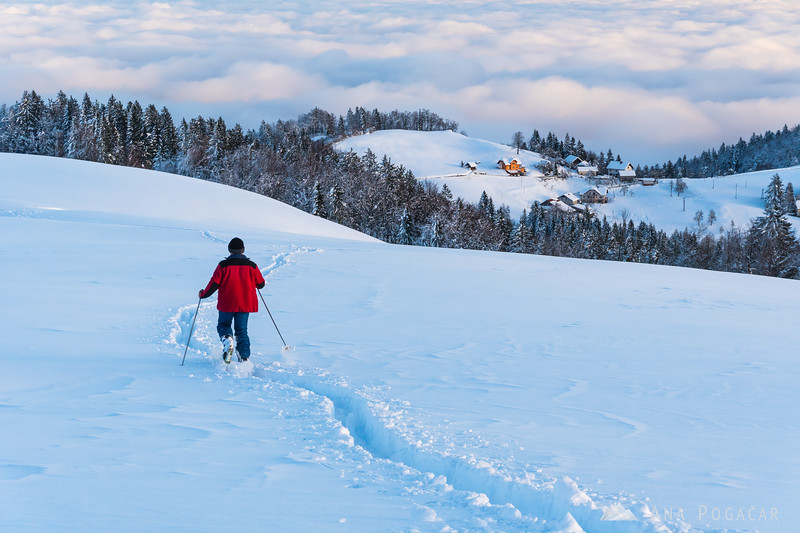Snow-shoeing in Goli vrh