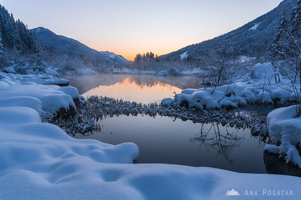 A very cold dawn at Zelenci