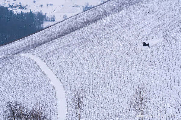 Snowy vineyards