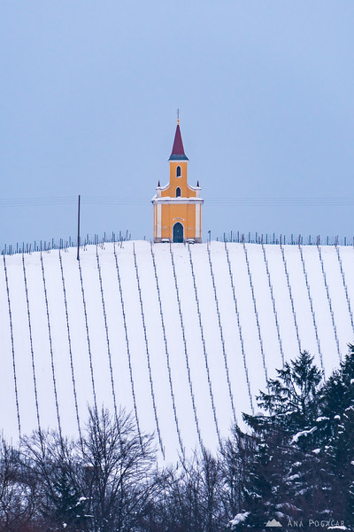 A chapel in a snowy vineyard