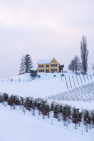 Snowy vineyard