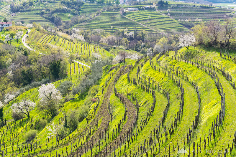 Vineyards near Šmartno