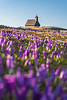 Crocuses and the chapel on Velika planina on a sunny spring morning
