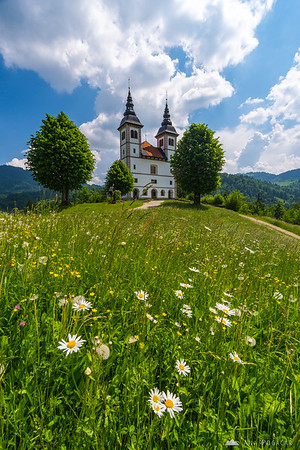 St. Volbenk church above the Poljane valley, and daisies