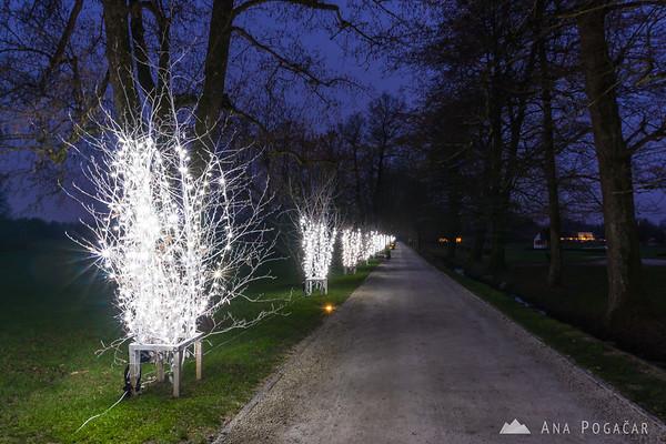 Thousands of lights in festive Arboretum