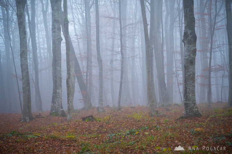 Foggy and rainy forest in the Gorjanci range, somewhere above Kostanjevica na Krki